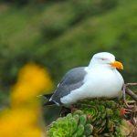 Birds at Alcratraz Island, San Francisco, California