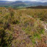 En fantastisk vandretur i solskin over sletterne i Kingussie, Skotland