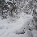 22 Vinter i Whistler - Snowboard Season