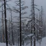 24 Vinter i Whistler - Snowboard Season