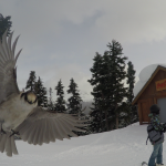 41 Vinter i Whistler - Snowboard Season