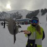 43 Vinter i Whistler - Snowboard Season