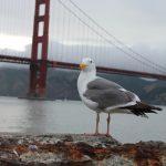 Golden Gate Bridge San Francisco Californien USA 04