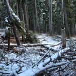 Jagten på sne